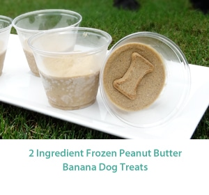 frozen_dog_treats_MID