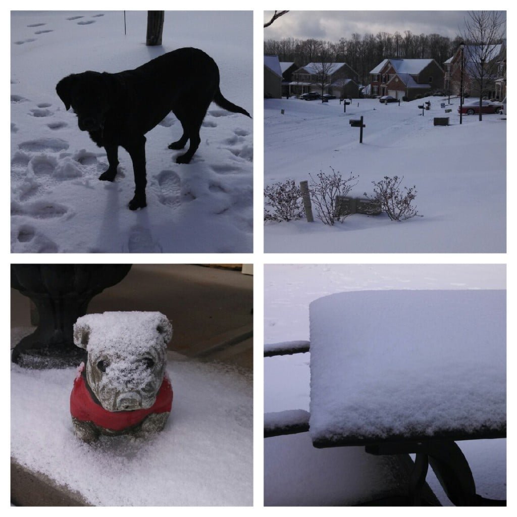 A Collage of Snowy Images From Getting Snowed In