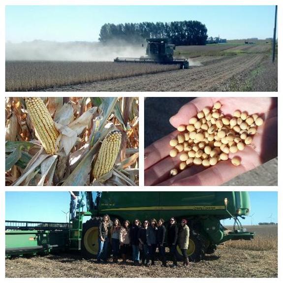 collage of a corn farm