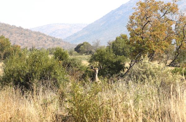 kudu4