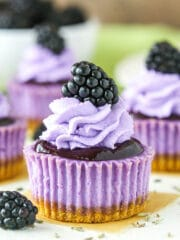 Mini Blackberry Lavender Cheesecakes recipe